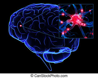 3d rendered illustration of human brain with active axon
