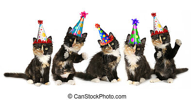 5 Kittens on a White Background With Birthday Hats