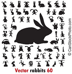 60 different rabbits on the white background