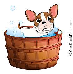 A cute little dog taking a bath