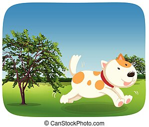 A dog runing in the park