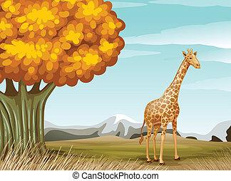 A giraffe near the big tree