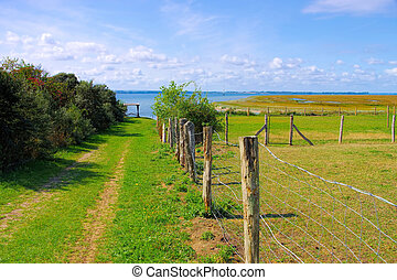 pasture on the island of Poel in northern Germany