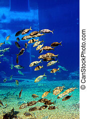 a group of tropical fish swimming in the aquarium