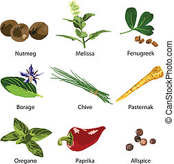 A set of different spices on a white background