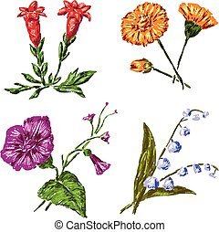 A set of sketches of various wildflowers