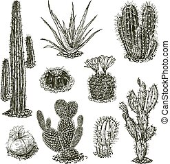 A set of various cactuses sketches