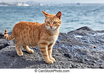 A striped ginger cat stands on coastal cliff.