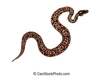 abstract image of a snake