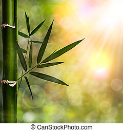 Abstract natural backgrounds with bamboo foliage