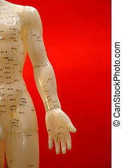 Cropped close up of an acupuncture torso on a red background.
