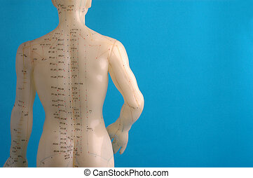 Cropped close up of an acupuncture model back photographed on blue.