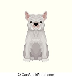 Adorable sitting french bulldog. Small breed of domestic dog. Human s best friend. Flat vector for t-shirt print or poster of pet clinic