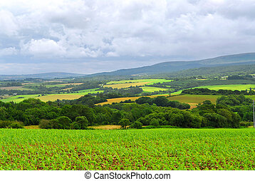 Scenic view on summer agricultural landscape in Brittany, France