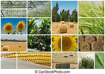 Collage made of photos about agriculture.