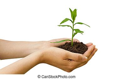 agriculture. plant in a hand isolated on white background