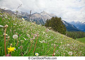 Alpine flowers in swiss alps