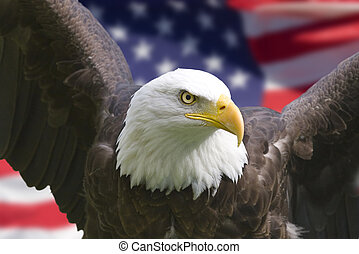 Bald eagle with American flag, focus on head (clipping path)