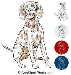 An image of a Redbone Coonhound dog.