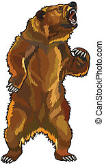 grizzly bear, aggressive roaring pose, picture isolated on white background
