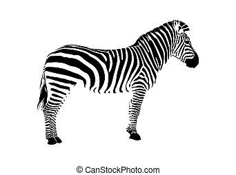 Animal illustration of vector zebra silhouette