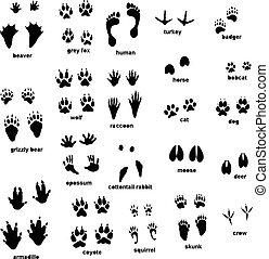 Set of different type of animal tracks