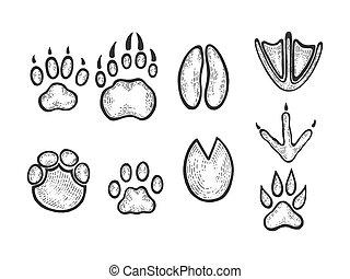 Animal tracks sketch engraving vector illustration. Scratch board style imitation. Black and white hand drawn image.