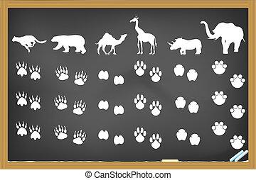 animals footprints on blackboard