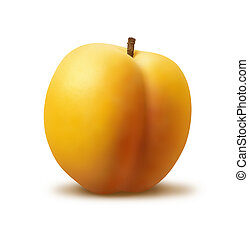 A photo of a single apricot on a white background