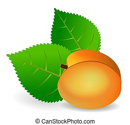 Illustration of an apricot and two leaves.