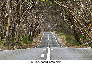 Arch of trees over country road creates powerful symbol of travel and journey; location is near Kingscote, Kangaroo Island, in South Australia. Road is Hogs Bay Road; Horizontal image;