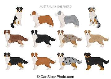 Australian shepherd dog. Different variations of coat color set