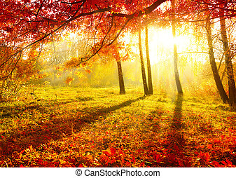 Autumnal Park. Autumn Trees and Leaves. Fall