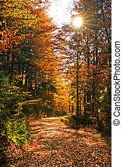 beautiful autumn mood