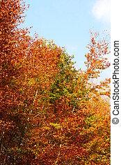 Autumns