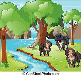 Baboon monkeys in the woods