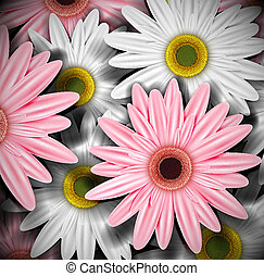 Background with gerberas