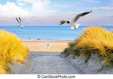baltic sea coast motif from east germany in europe
