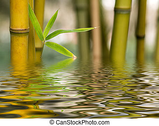 Bamboo shoots with water reflection