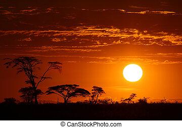 Beautiful africa safari sunset