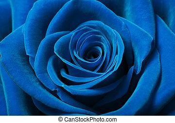 Close up image of beautiful blue rose