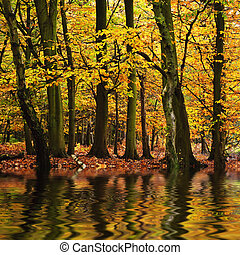 Beautiful forest landscape with vibrant Autumn Fall season colors reflected i n water