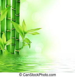 Beautiful Fresh Bamboo