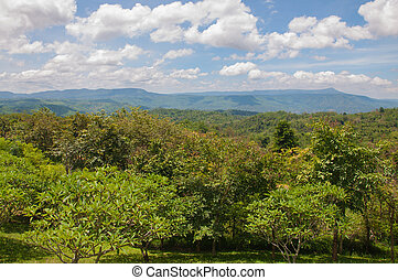 Beautiful green mountain landscape with trees