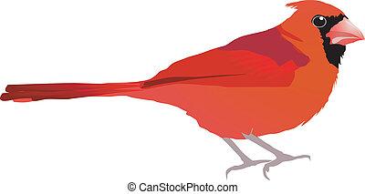 Beautiful red bird. Vector EPS10