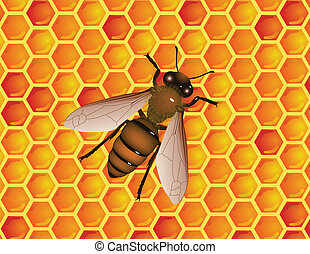 bee with honneycomb