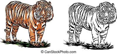 Vector - bengal tiger
