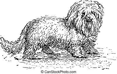Bichon, vintage engraved illustration. Dictionary of words and things - Larive and Fleury - 1895.