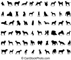 Big collection vector silhouettes of dogs with breeds description