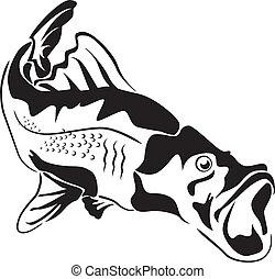 Predator fish with big mouth